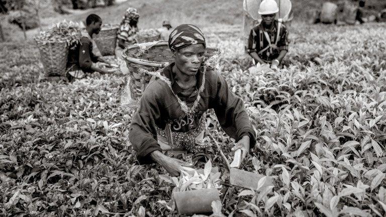 بلاکچین در زنجیرهی تأمین چای